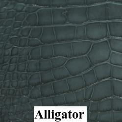 Alligator Belly