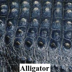 Alligator Hornback